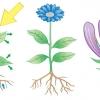 gardening19