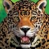natural_history17